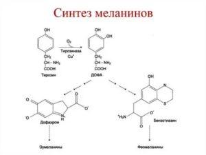 Причины и симптомы недостатка и избытка меланина в организме