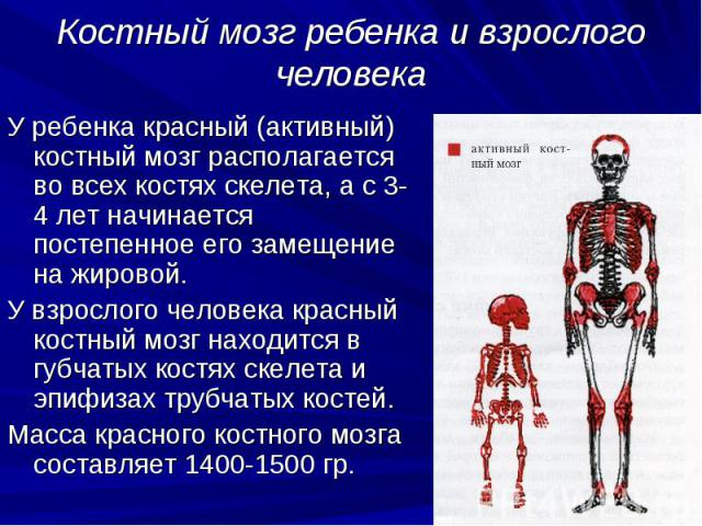 Опухоль костного мозга — симптомы, проявления и прогноз
