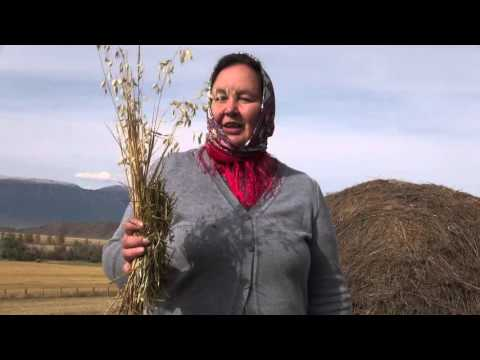 Сено или солома – как понять, чем вы кормите своих коз — agroxxi