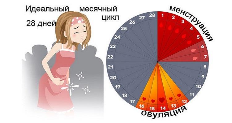 Сбой месячных: каким должен быть менструальный цикл в идеале