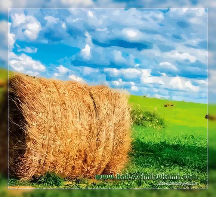5 советов, как использовать сено и солому в огороде