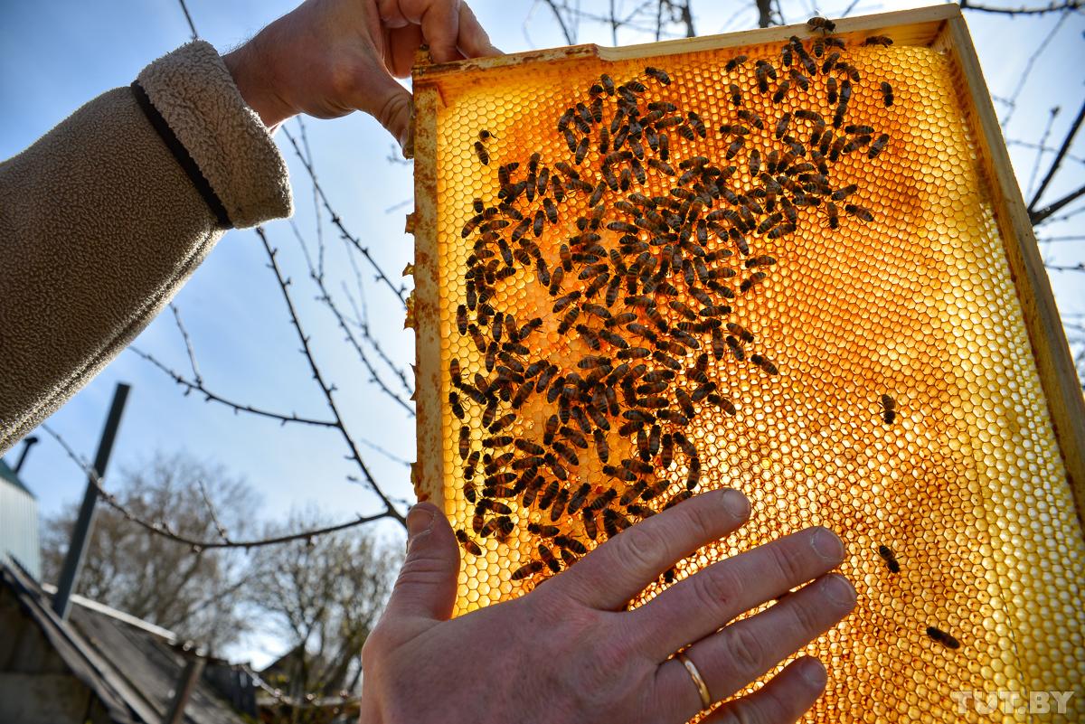 Пчеловодство с нуля: разновидность пчел и обустройство пасеки — cельхозпортал