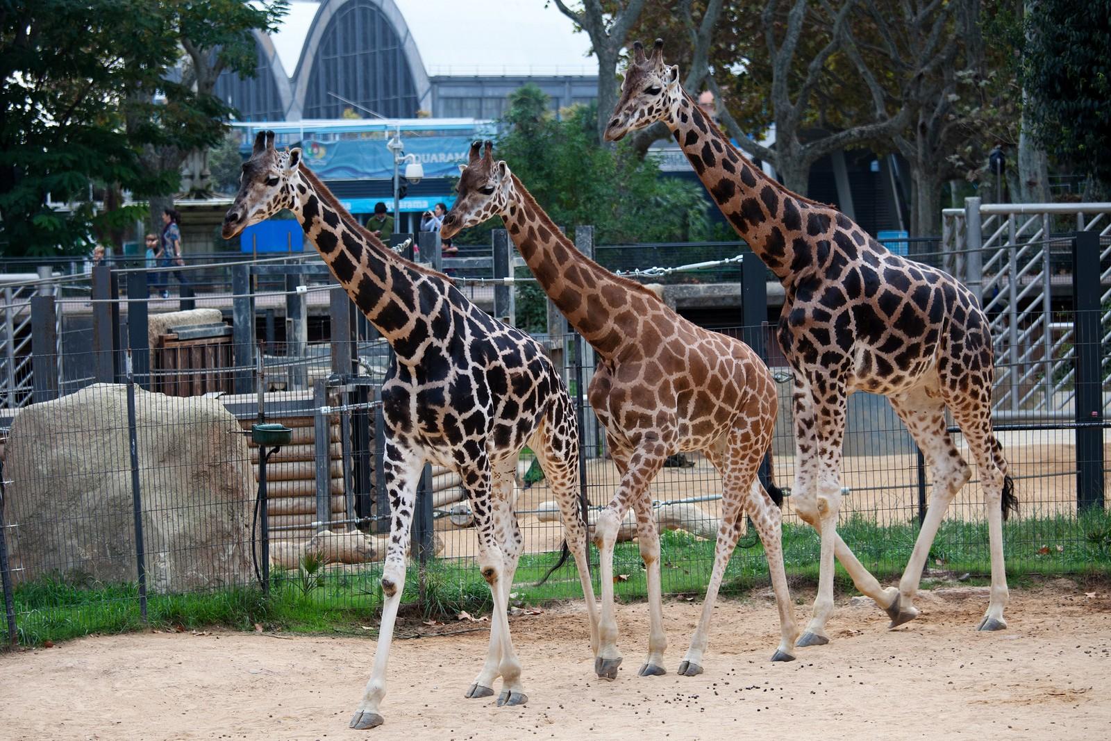 Что это - зоопарк? специфические особенности