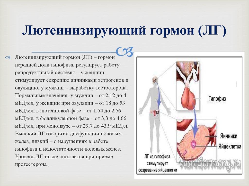 Лютеинизирующий гормон у мужчин, норма
