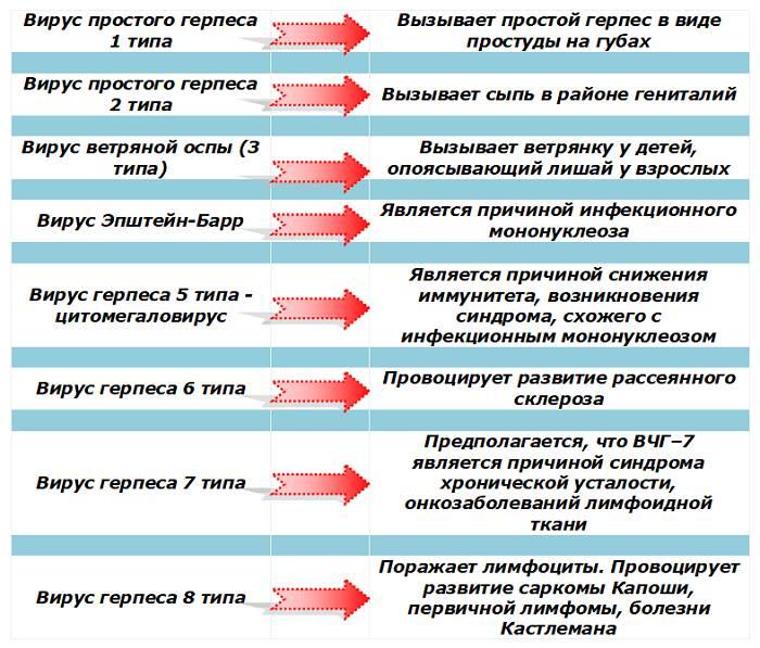 Герпес 6 типа: что это,причины и симптомы, как передается герпесвирус 6 типа, симптомы у рассеянного склероза и сколько с ним живут | pro-herpes.ru