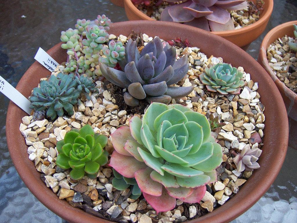 Суккуленты: описание, виды, выращивание, посадка, размножение и уход в домашних условиях, полезные свойства (70+ фото & видео) +отзывы