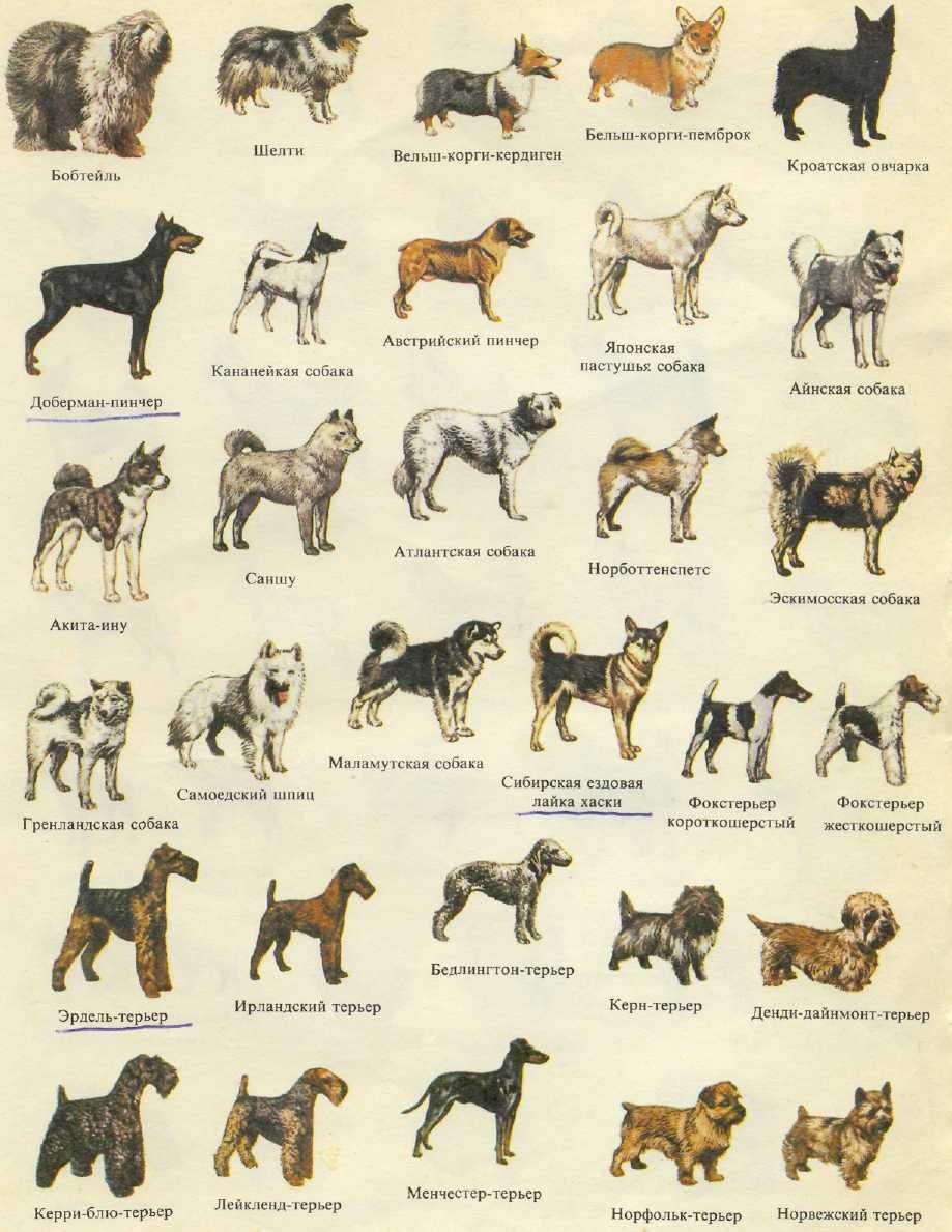 Символ собака @ – история появления и практика применения