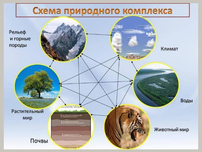Объекты природы. живая и неживая природа