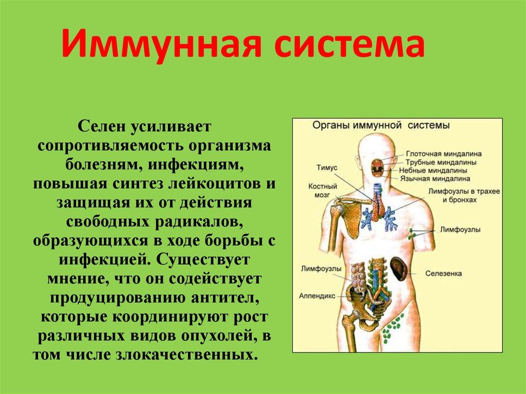Иммунитет человека: функции, виды и органы иммунной системы. кратко и понятно