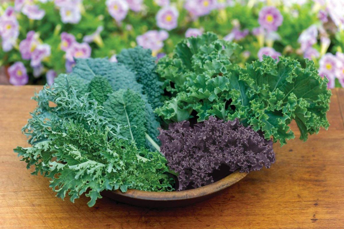 Что приготовить из капусты кейл (кале) и другойсупер-зелени?