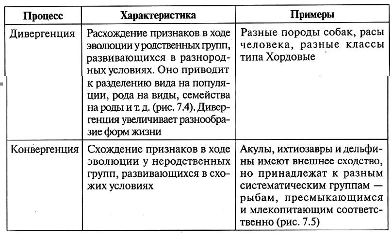 Дивергенция - это в биологии... примеры, определение и особенности :: syl.ru