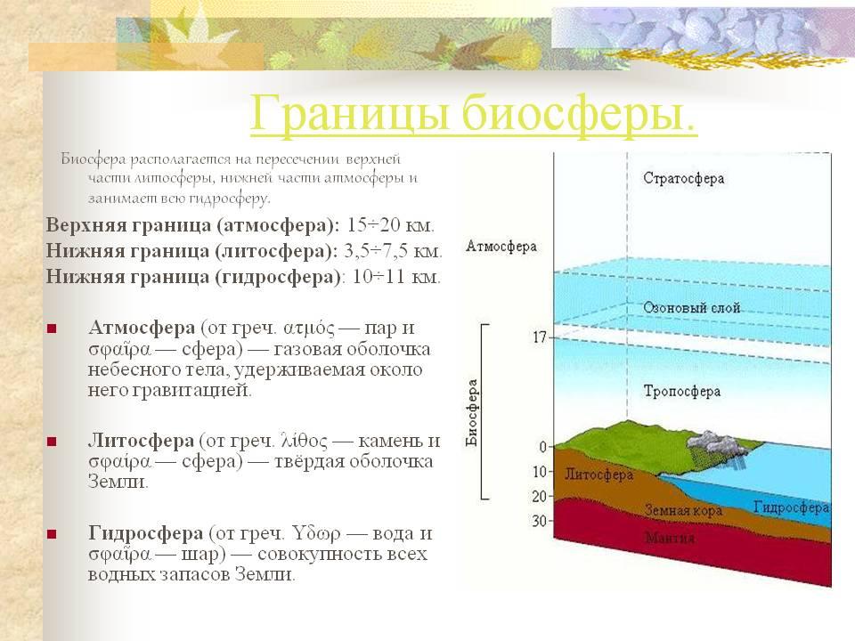 Что такое биосфера. ее границы, структура и функции