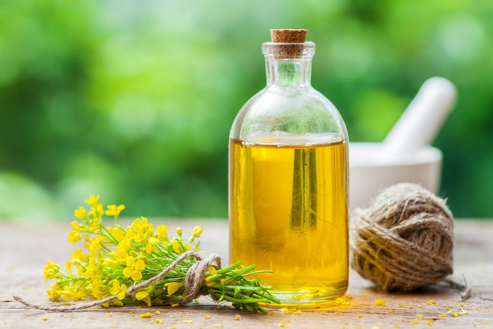 Рапсовое масло: вред или польза для человеческого организма?
