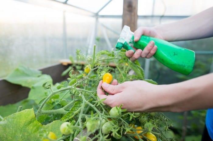 Азотные удобрения для томатов: как подкармливать, лучшие удобрения, симптомы недостатка