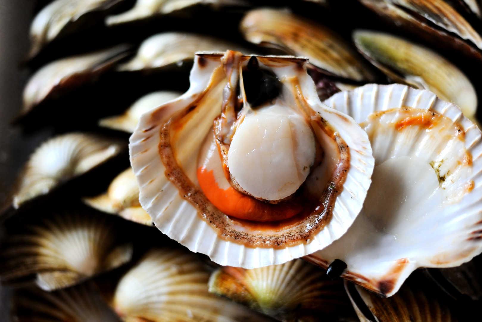 Морские гребешки: состав, полезные свойства. как приготовить морского гребешка | знать про все