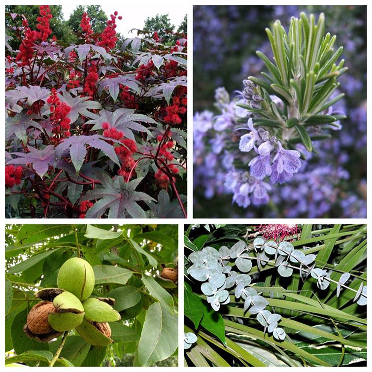 Полезные растения для сада и огорода
