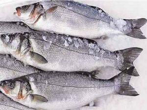 Рыба сибас (морской волк): фото и описание, где водится, польза и вред