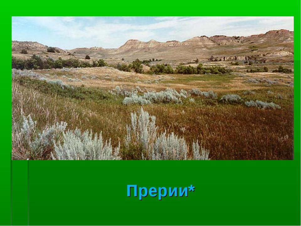 Северо-американские степи, или что такое прерии?
