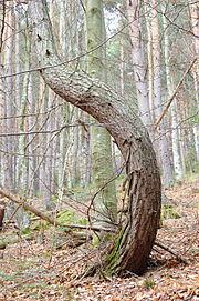 Пороки древесины. столярные и плотничные работы