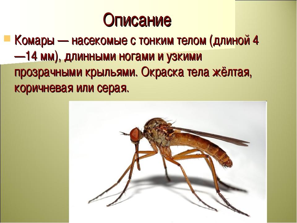 Комары — энциклопедия «вокруг света»