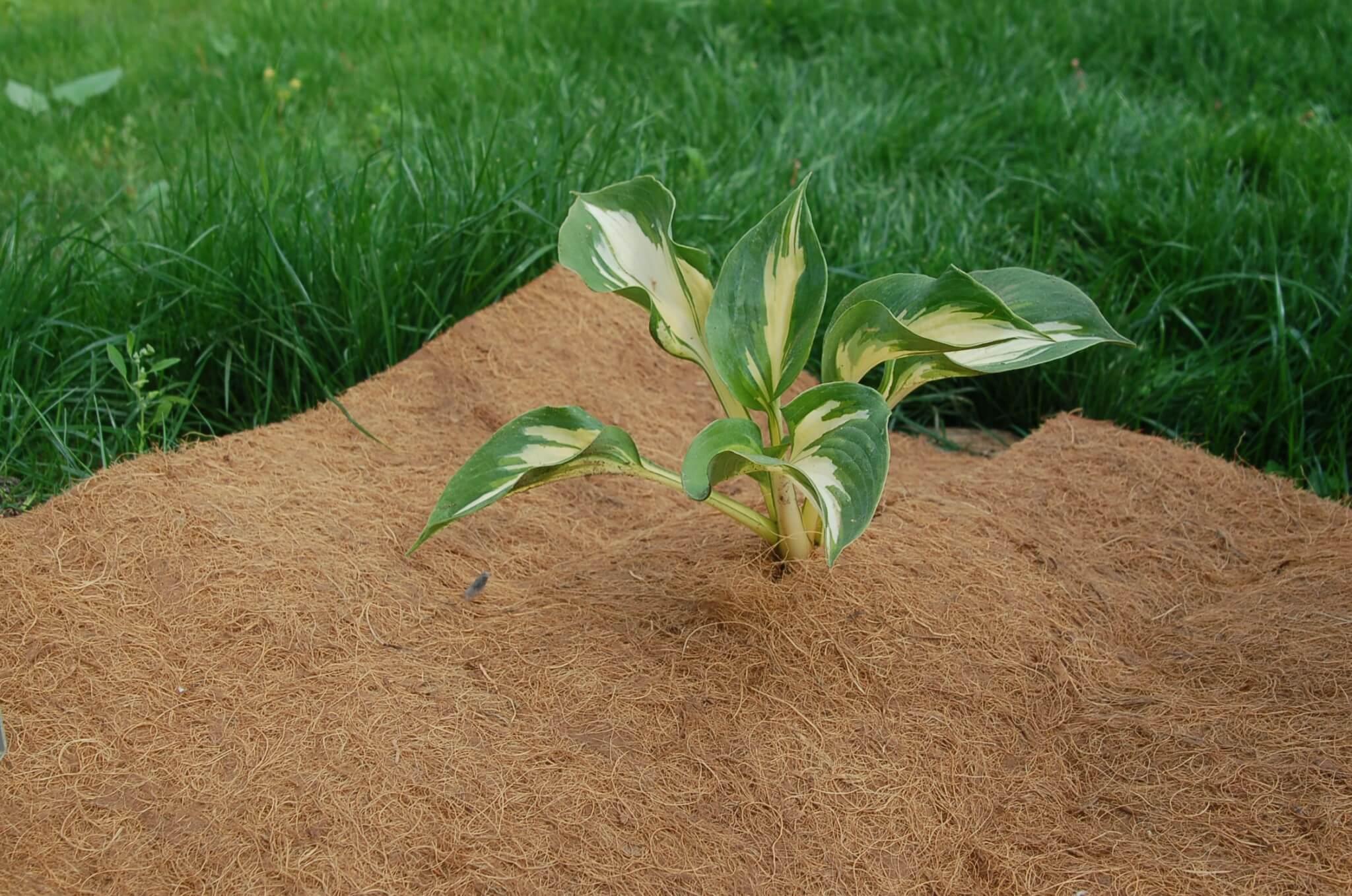 Мульчирование почвы - что это такое, и в чем польза данного метода?