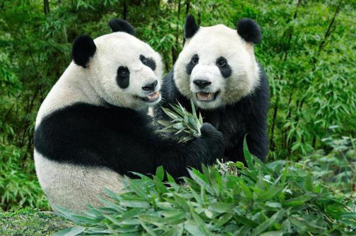 Алгоритм google panda: как определить фильтр панда