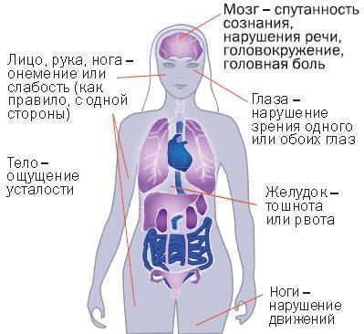 Эндокринная система человека: 163 факта о ее строении и функциях
