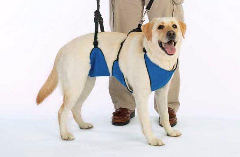 Как самостоятельно сделать шлейку для собак: пошаговое руководство