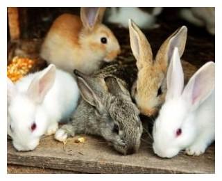Кролик – описание, породы, виды, фото, декоративные кролики