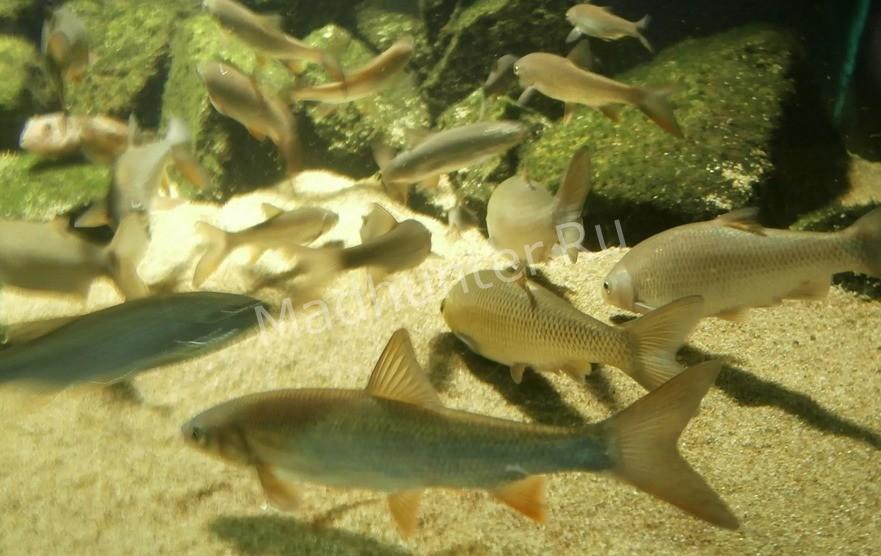 Знак зодиака рыбы ♓   даты, характеристика, совместимость, талисманы