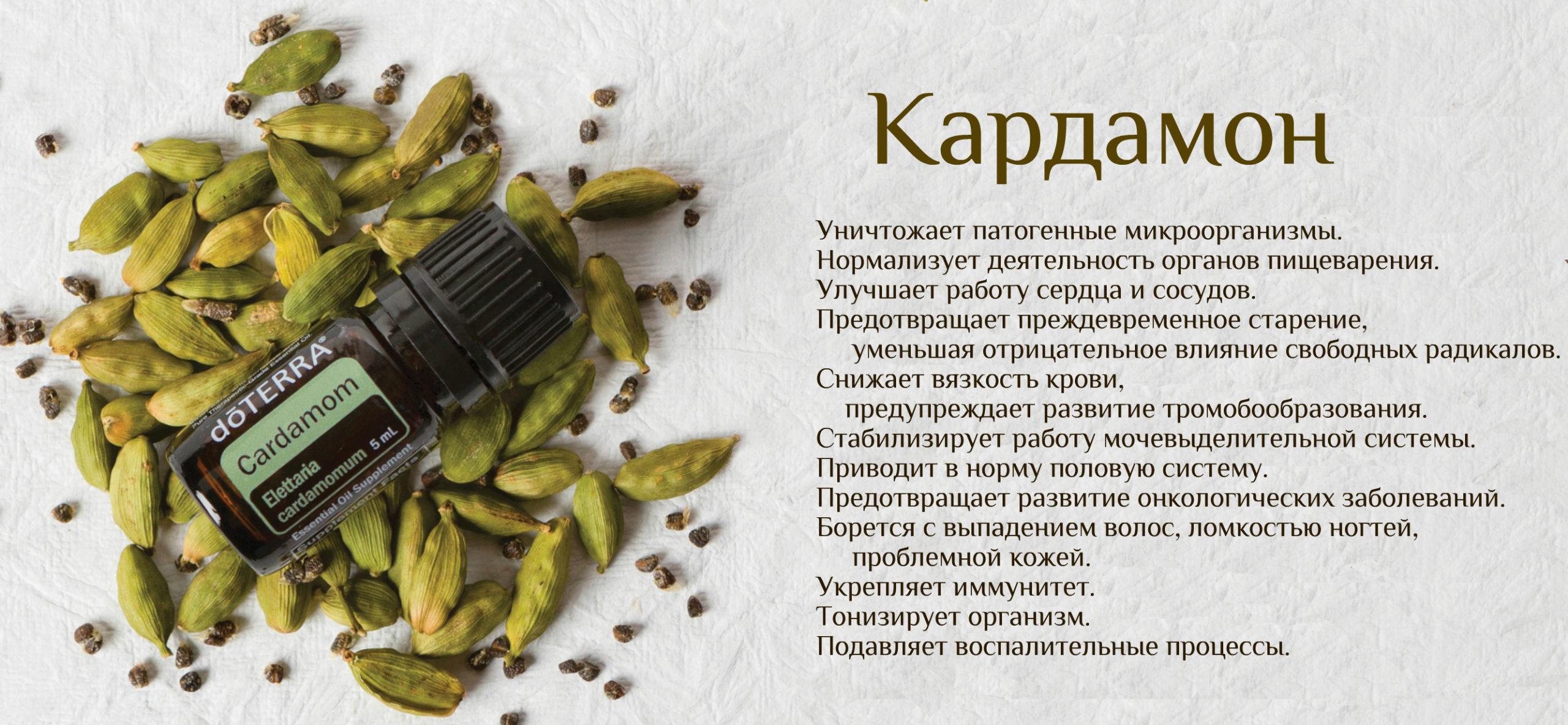 Кардамон - его польза и вред. применение и полезные свойства