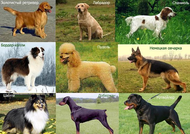 Кто такие собаки