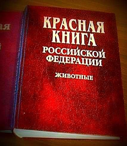 Что такое красная книга и зачем в ней цветные страницы?