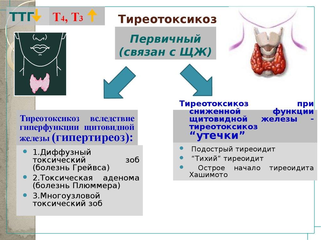 Тиреотоксикоз - симптомы у женщин, лечение и питание