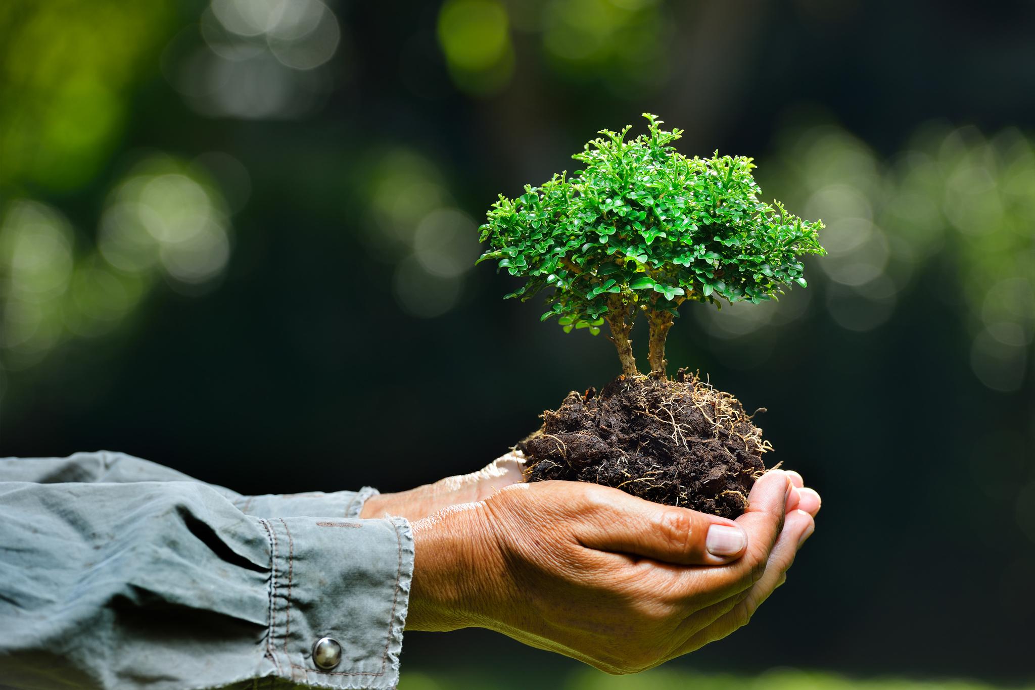 Экология — википедия с видео // wiki 2