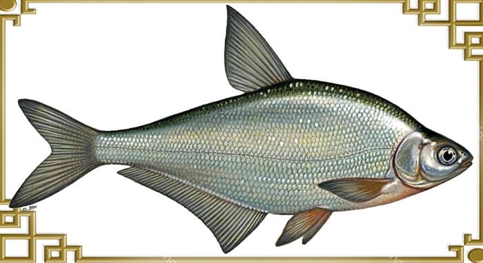 Рыба* что это? значение слова рыба*