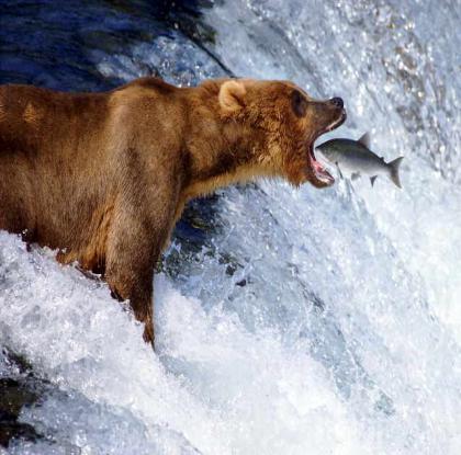 Хищничество примеры. взаимосвязь живых существ.