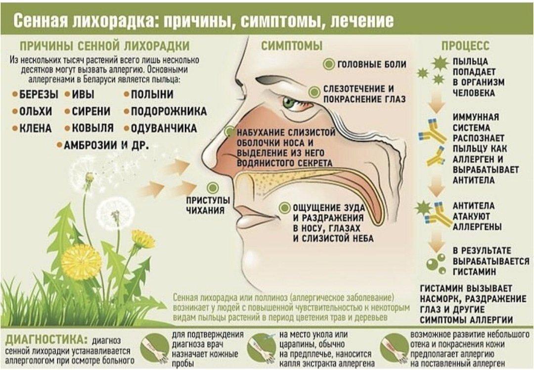 Поллиноз - симптомы, причины, профилактика и лечение