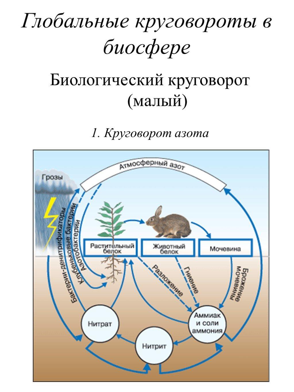 Круговорот веществ в биосфере – энергия, сущность и значение биологического круговорота