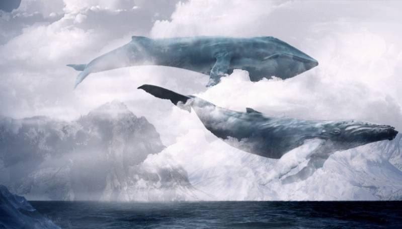 Синий кит или голубой кит – фото животного, сколько весит, размеры, длина, где живёт.