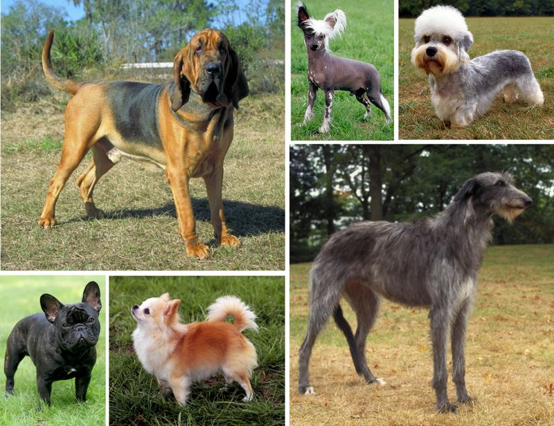 Породы собак – результат целенаправленной работы человека
