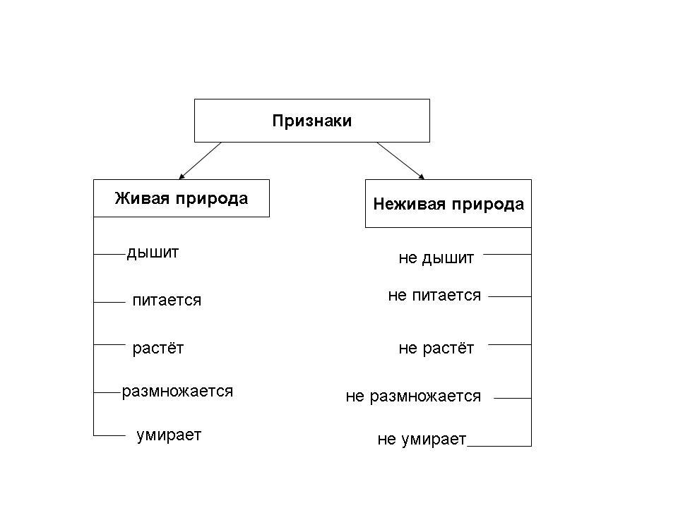 Урок 3: живая и неживая природа - 100urokov.ru