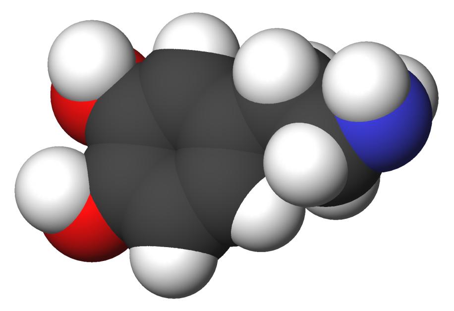 Дофамин - что это такое, как повысить уровень гормона счастья