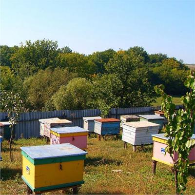 Разведение пчел – инструкция для начинающих пчеловодов