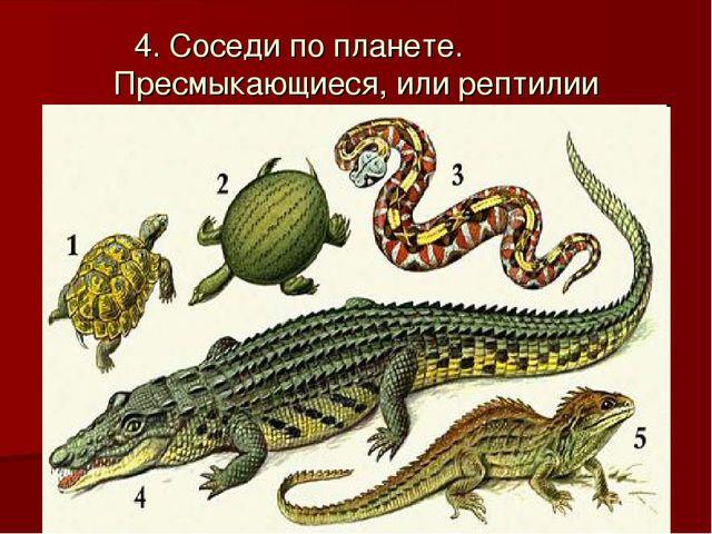 Класс пресмыкающиеся или рептилии. характеристика, строение и происхождение