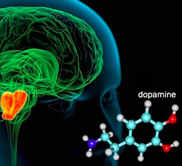 Роль дофамина и способы его повышения | food and health