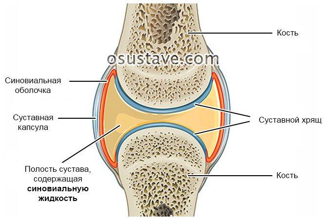 Синовиальная жидкость в коленном суставе: лечение отклонений, причины и симптомы, нормы анализов, как увеличить (фото)