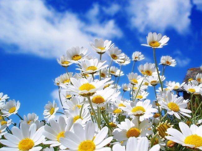 Что ты мне подаришь, лето?..красивые стихи про лето