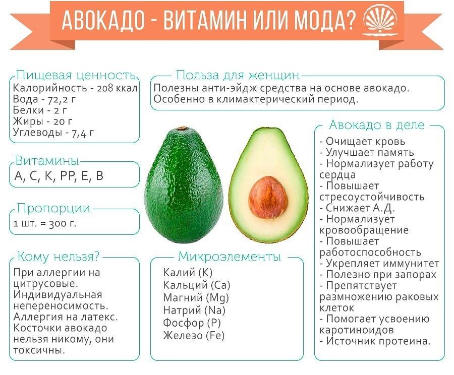 Авокадо: полезные свойства и выращивание в домашних условиях