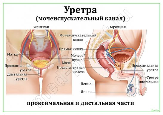Лечение уретрита у женщин